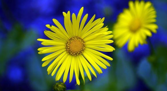 Kleine Sonnenblume!