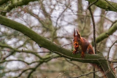 Eichhörnchen BotGartGT1   K