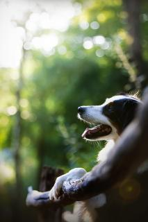 Sonniges Hundeportrait