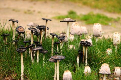 kleine Pilze ganz groß