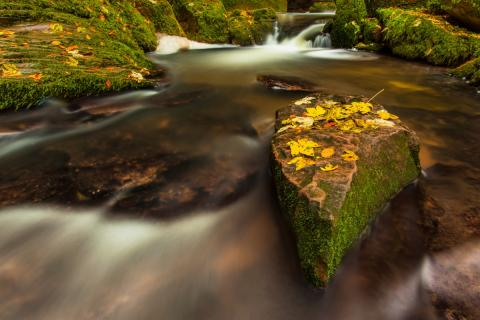 Herbst am Wildbach
