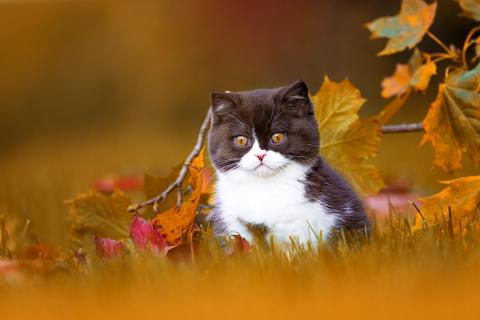 BKH Katzenbaby im Herbst
