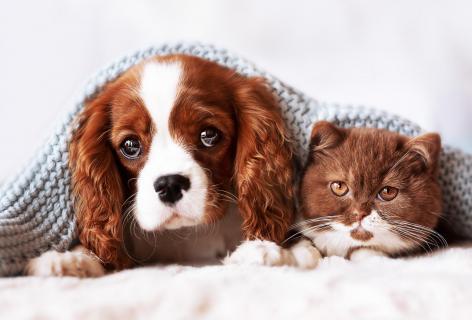 Wenn Farbe verbindet. Beste Freunde Welpe und Kitten