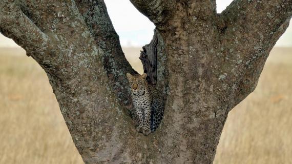 In aussichtsreicher Position (Serengeti)
