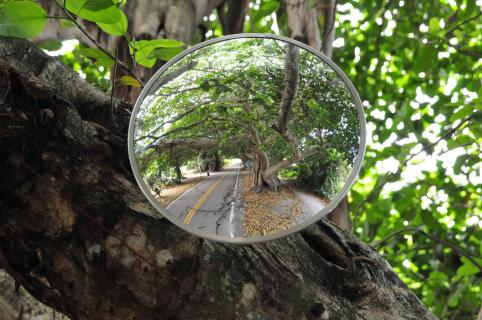 Banyan Tree Way