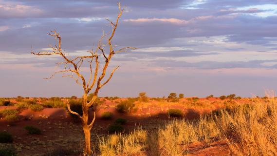 Sonnenuntergang in der Kalahari