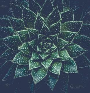 17_Perfekte_Symmetrie_Silke_van_Ohlen