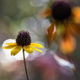 Blüten im Wind