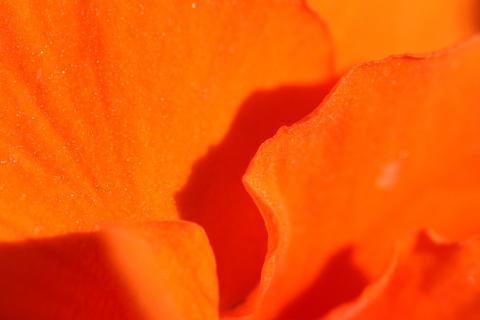 Blütenblätter orange