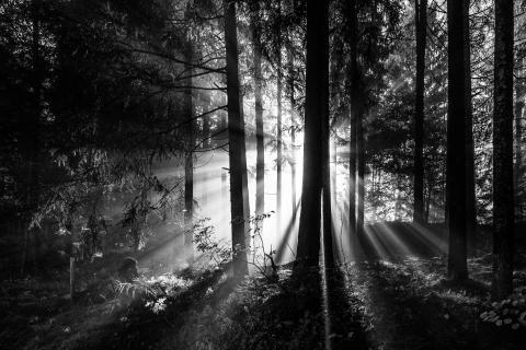 Am Morgen im Wald
