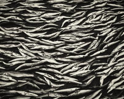 Sardinen