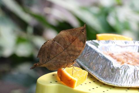 Fliegendes Blatt