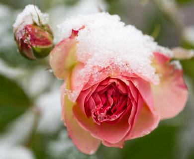 52 Winterbild_Kurt_Hoedl