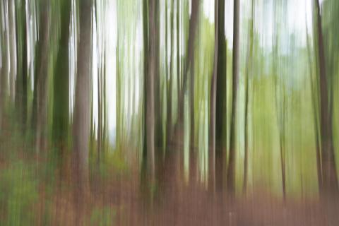 Bäume verwischt_P6110663