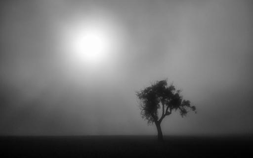 Nebel schannenbach