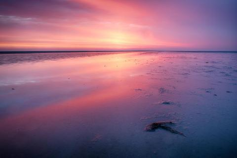 Purple Wadden Sea