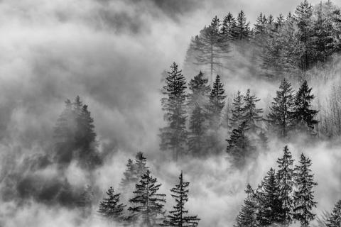39_Herbst im Nebel_Susanne_Baumberger