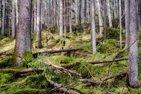 Märchenlandschaft Elfenwald