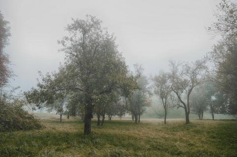 39 Herbst im Nebel_Klaus_Steinberg