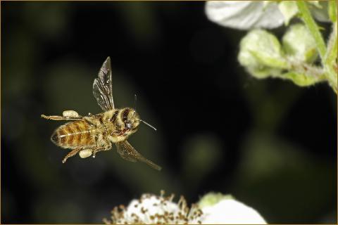 Dynamic Bee