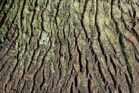 Struktur der Baumrinde