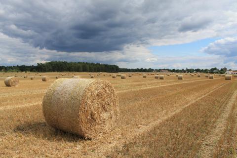 Nach der Getreideernte