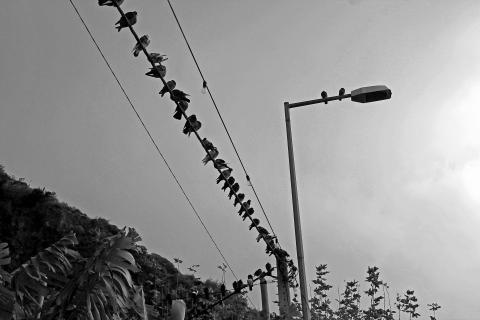 Vogelversammlung auf dem Strammast
