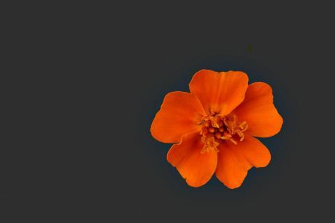 Freigestellte kleine Blüte