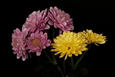 Kleiner Blumenstraüß