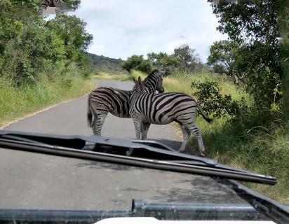 Pilanesberg Nationalpark