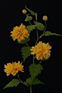 Gelbe