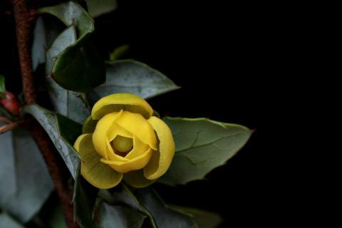 Kleine Gelbe