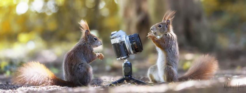 Shooting Squirrels I