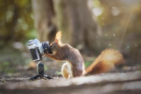 searching Squirrel