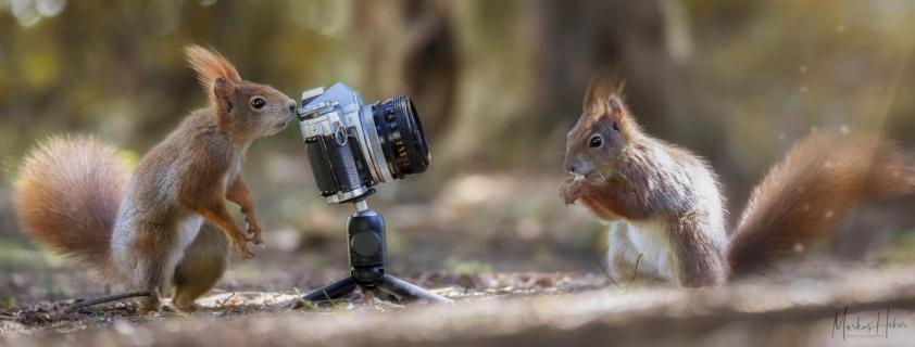 Shooting Squirrels II