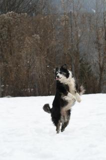 12 Fotografieren Sie ein-Haustier_Natascha_Mark