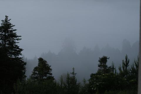 39_Herbst-im-Nebel_Natascha_Mark