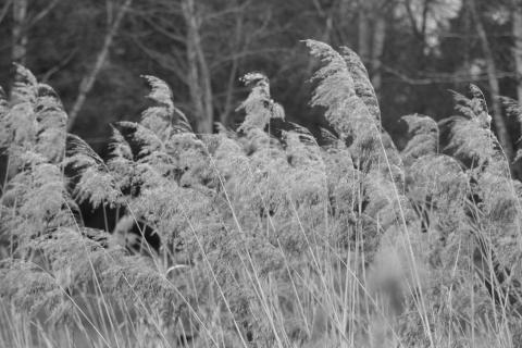 49_Foto-in-schwarzweiss_Natascha_Mark