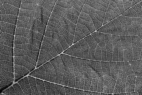 Muster in schwarzweiss