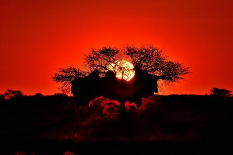 Sonnenuntergang mit Silhouette
