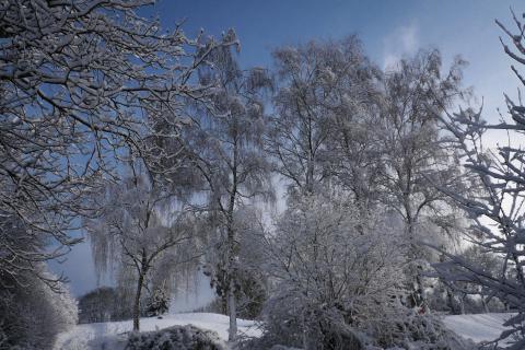 52 Winterbild_Arno_Kratky