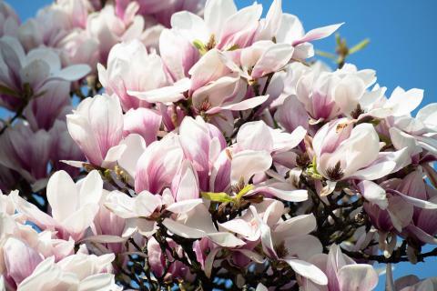 07 Fangen Sie den-Frühling-ein_Arno_Kratky