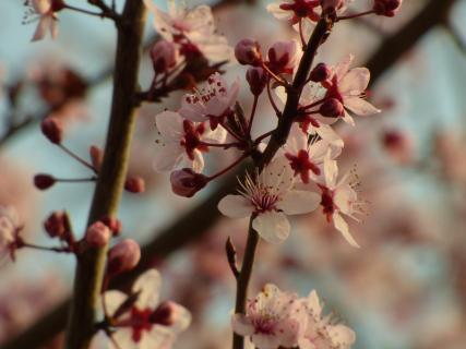 07_Fangen Sie den Frühling ein_Milena_Heil