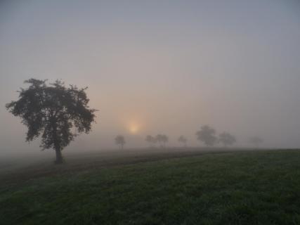 Herbst im Nebel