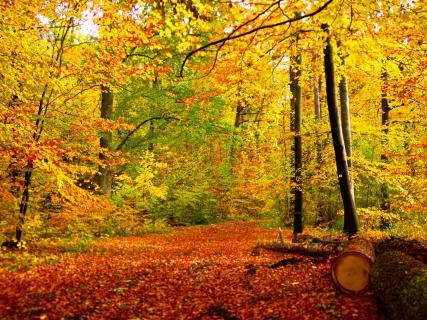 Bunter Blätterwald