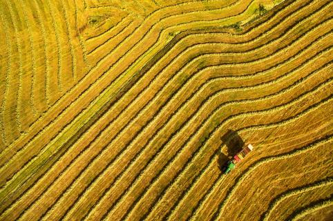 Agrarlandschaft in der Ernte
