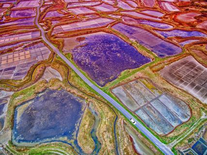 Felder Strukturen