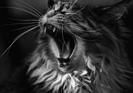 12_Fotografieren-sie- ein-Haustier_Eurofoto
