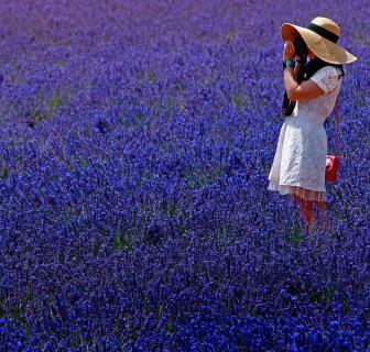 Ich fotografiere die lila-blauen Blüten ....