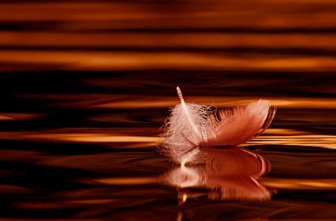 Flamingofeder auf dem See